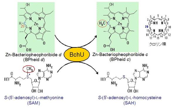 研究内容 大阪大学大学院理学研究科生物科学専攻 光合成の分子機構